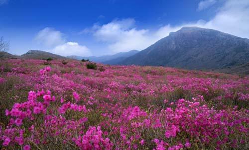 화사한 봄꽃을 대구에서 즐기세요