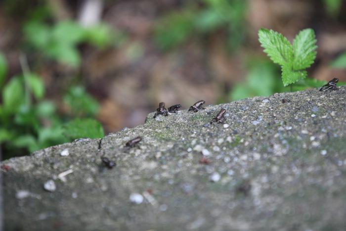 10.5.25 욱수동 망월지 두꺼비(1)