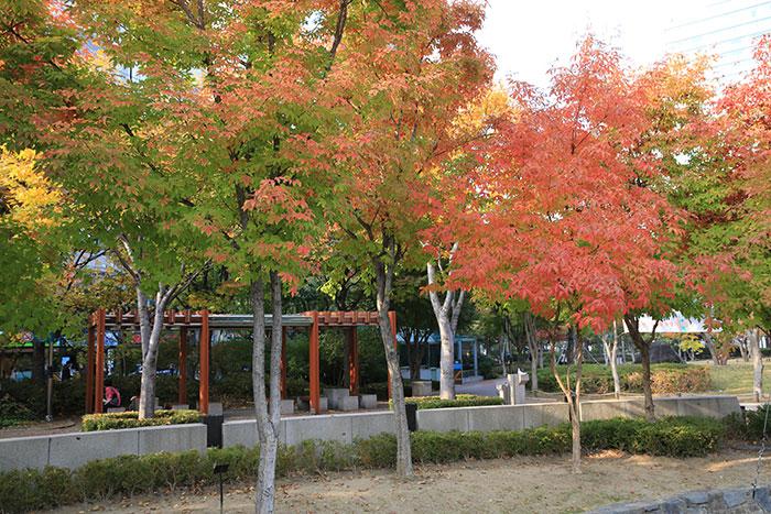 13.11.5 2.28중앙공원 가을사진