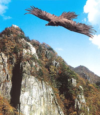 대구시조 독수리