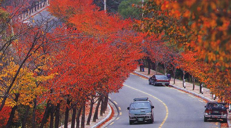 가을의 팔공산 단풍길