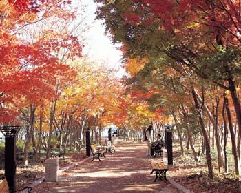 국채보상운동기념공원 가을