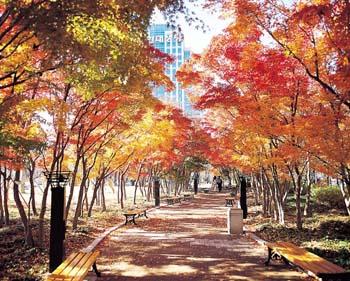 국채보상운동기념공원 가을이미지