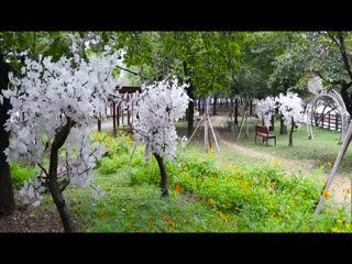 꽃보라동산