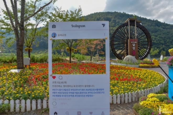 대구에서 만날 수 있는 가을 꽃 특집 #2탄 #국화
