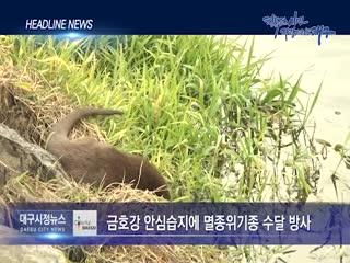 시정영상뉴스 제85호(2019-11-19)