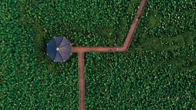 반야월 연꽃단지(2020대구화보 p37)