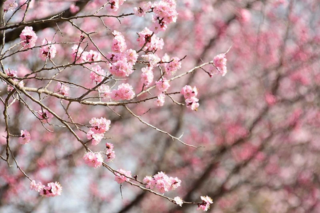 수목원에서 봄꽃 맞으며 봄기운을 느껴보세요