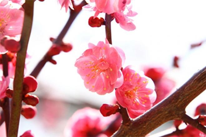 봄 꽃놀이하기 좋은 대구 명소 Best3