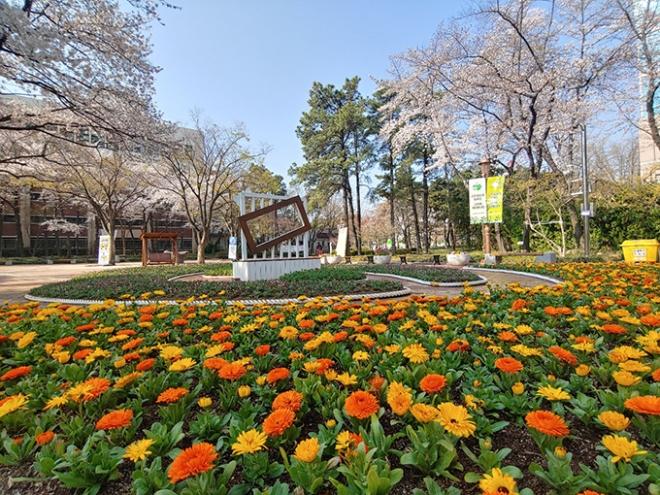 대구시설공단 도심공원, 국채보상공원 등 3개 공원 내 봄꽃 전시