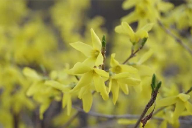 대구의 봄을 다시 봄!(영상)