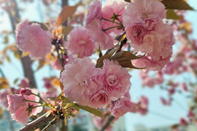 대구 가볼 만한 곳 월곡역사공원과 겹벚꽃 풍경 감상하고 왔어요!