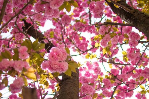 활짝 핀 겹벚꽃 보러 월곡역사공원으로 꽃놀이 가요~!