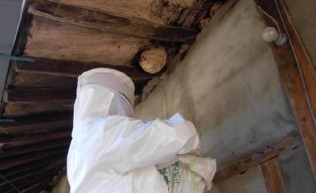 111년만 폭염 속, 벌집제거 구조출동 사상 최고