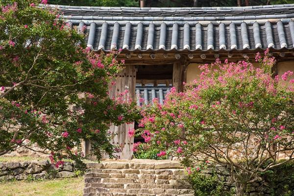 여름 끝자락에 만나는 분홍빛 배롱나무 - 도동서원/신숭겸 장군 유적지/육신사
