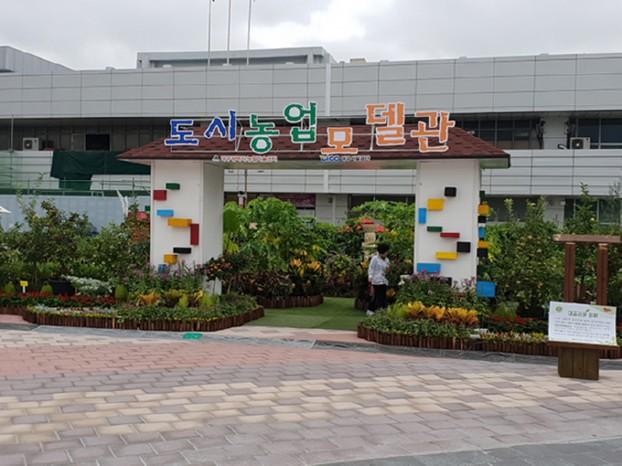 대구시설공단, 동대구역광장 도시농업 체험 실시