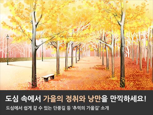 도심 속에서 가을의 정취와 낭만을 만끽하세요!  도심에서 쉽게 갈 수 있는 단풍길 등 '추억의 가을길' 소개