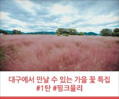 대구에서 만날 수 있는 가을 꽃 특집 #1탄 #핑크뮬리