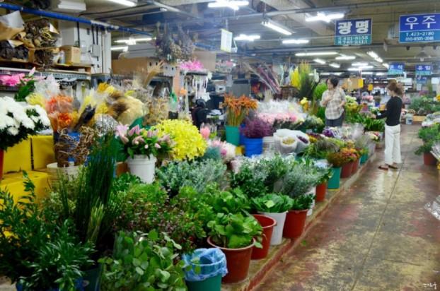 대구 꽃시장 꽃 백화점 - 칠성꽃시장