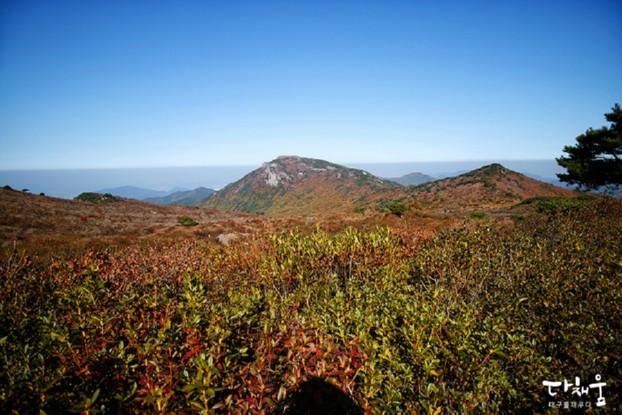 천고마비의 계절 가을에 즐기는 비슬산 단풍