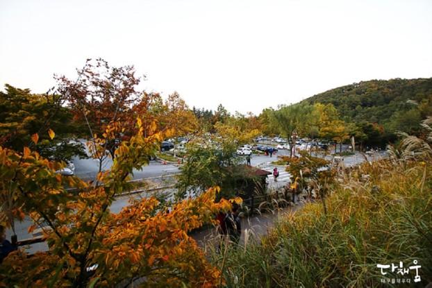 대구수목원 국화축제 어때요? - 대구 11월 축제/2017 대구수목원국화축제기간