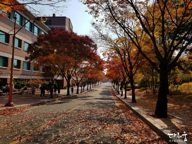 아름다운 계명대 캠퍼스에서 가을을 만나다! 단풍구경은 계대에서!