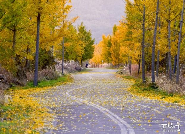 만추, 아름다운 대구 가을풍경! 단풍이 떨어지기 전에 주말엔 단풍나들이가요!