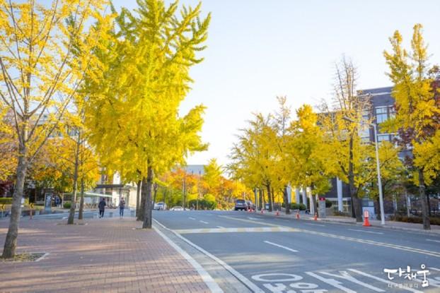 대구 단풍명소는 캠퍼스에서 찾자! - 경북대&대구대&대명동 계대 가을풍경