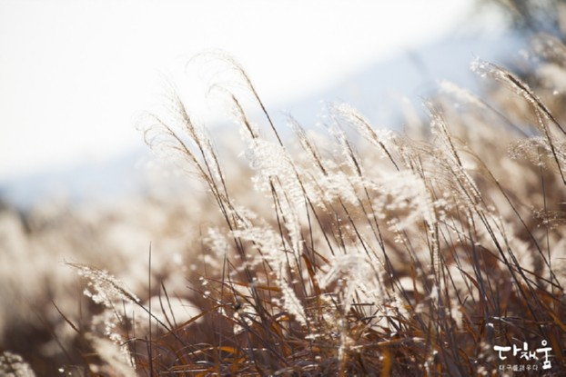 가을의 끝자락, 겨울 문턱엔 억새밭에서 인생사진을! - 하중도/불로동 고분군/ 금호강 해맞이다리