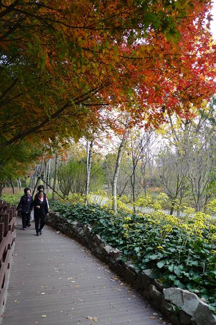 가을의 낭만과 정취를 만끽하세요
