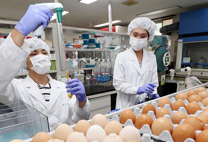 계란 살충제검사 실험실