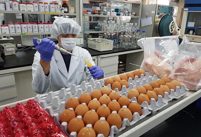 계란 살충제검사 실험전경