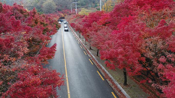 팔공산순환도로의 단풍사진