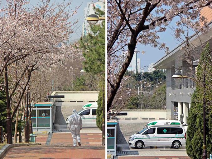 구급차로 향하는 의료진의 머리 위로 벚꽃이 만개해 있다.